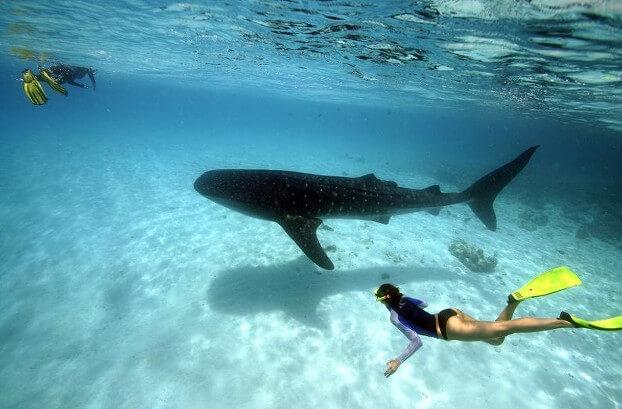 Squalo balena Maldive, Ukulhas