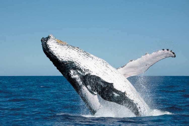 Balena, Australia, Queensland