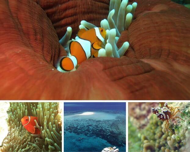 La Grande Barriera Corallina vista da sott'acqua