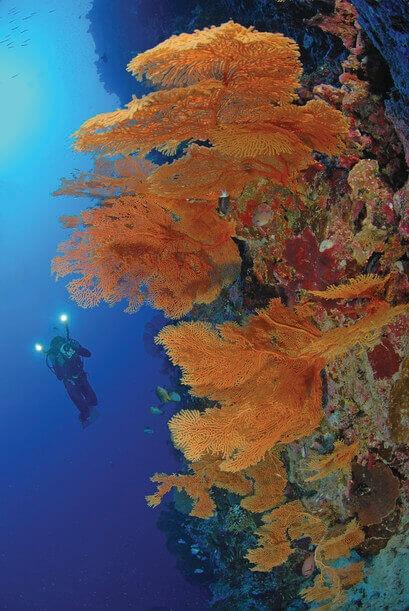 Scuba Diving Christmas Island - Australia