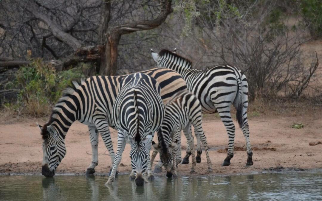 Il SudAfrica: il richiamo inconfondibile della natura