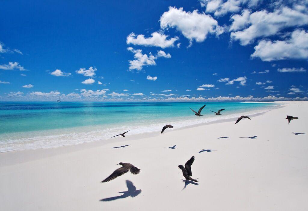 58a5b742b213b-bird_island_lodge