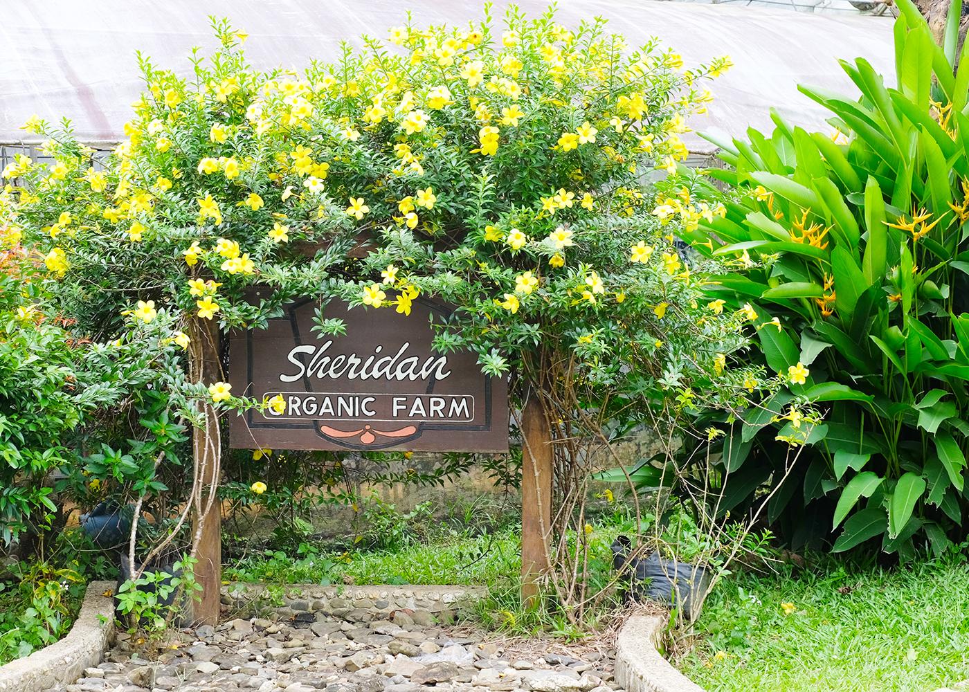 5a815e290edf8-sheridan_resort_sabang_undergr