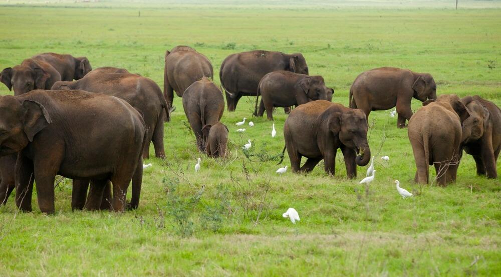 Interazione con gli elefanti nello Sri Lanka. Un'esperienza sostenibile e autentica
