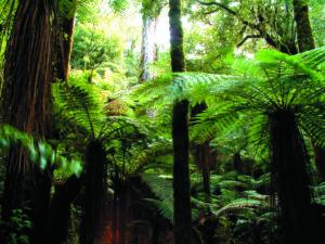 Foresta Pluviale di Whirinaki, Nuova Zelanda