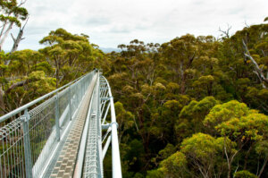 Tree Top Walk, Australia_kiaoraviaggi