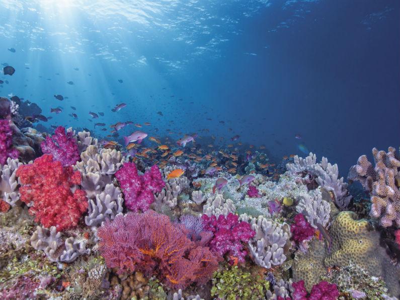 barriera corallina_fiji