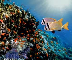 Fondali Maldive_snorkeling_kiaoraviaggi