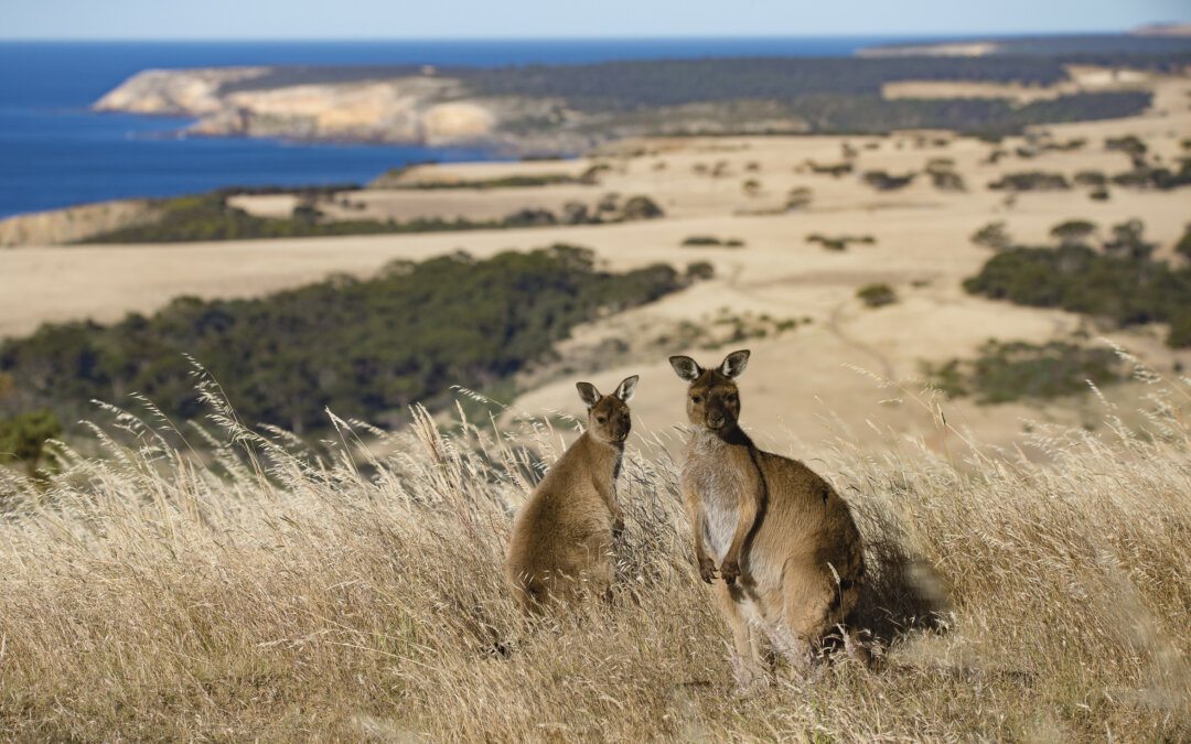 Risultato immagini per kangaroo island