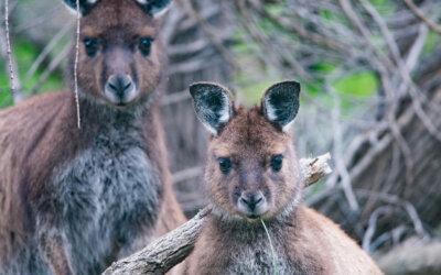 Incendi in Australia: dove sono e perchè non rinunciare al tuo viaggio