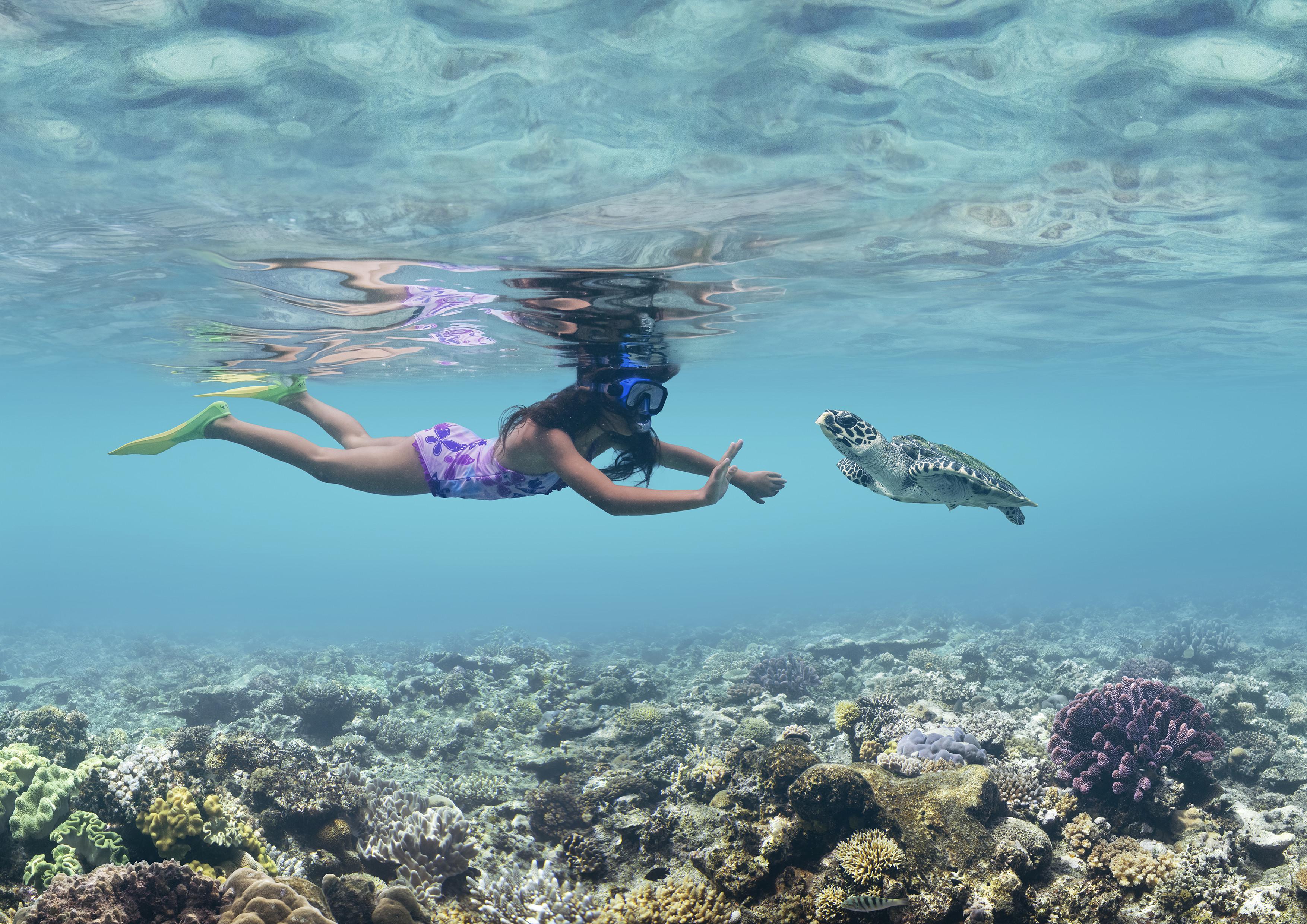 Isole Fiji snorkeling coralli