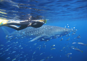 Australia Ningaloo Reef Coral Bay Australia