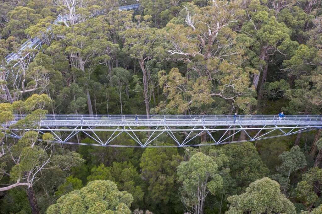 South West - Walpole - Valley of the Giants Treetop Walk